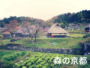 ijukeikaku021